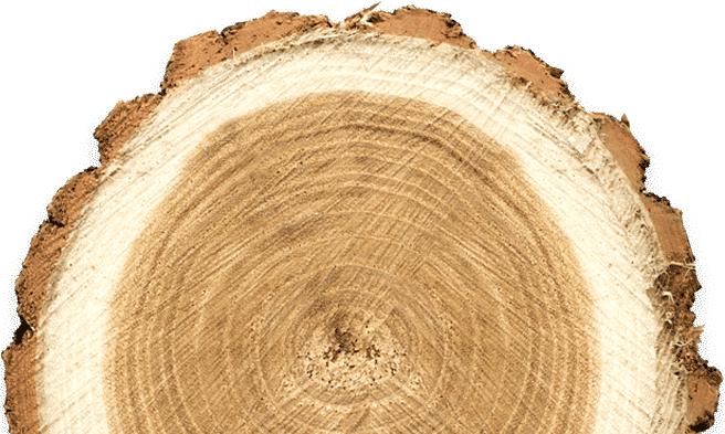 Drvo za ogrijev